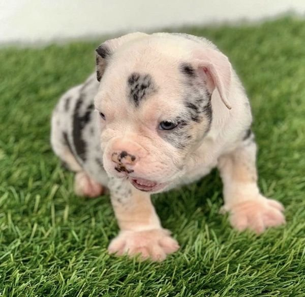 Smart puppies Available. Cute & intelligent