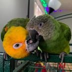 Parrots for rehoming.