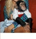 Chimpanzee Monkeys for Sale