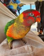 Beautiful parrots for adoption