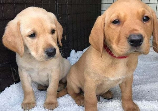 Healthy puppies for sale
