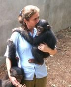 Lovely Chimpanzee Monkeys for Sale