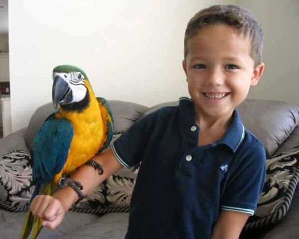 Two beautiful Talking Blue and Gold Macaw Parrots