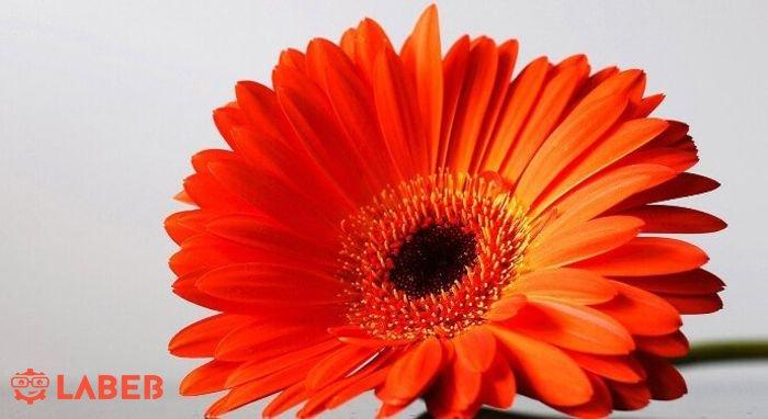 أزهار وورود برتقالية اللون