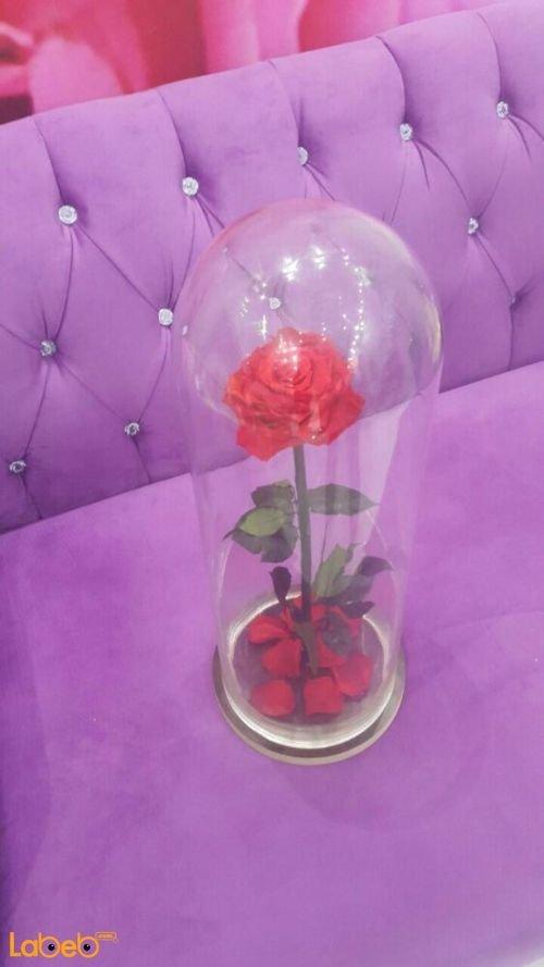 وردة حمراء مع فازة خاصة تعيش لمدة سنة منظر جميل