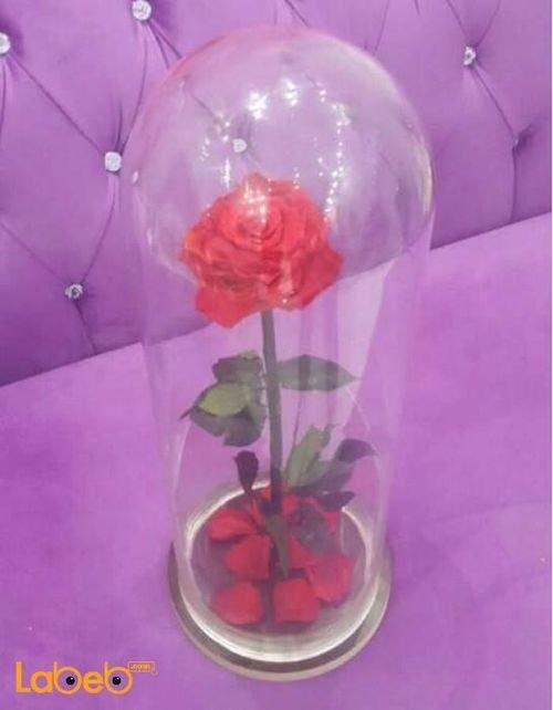 وردة لون أحمر مع فازة خاصة تعيش لمدة سنة منظر جميل