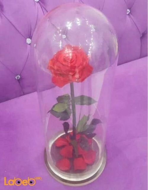 وردة حمراء مع فازة خاصة تعيش لمدة سنة