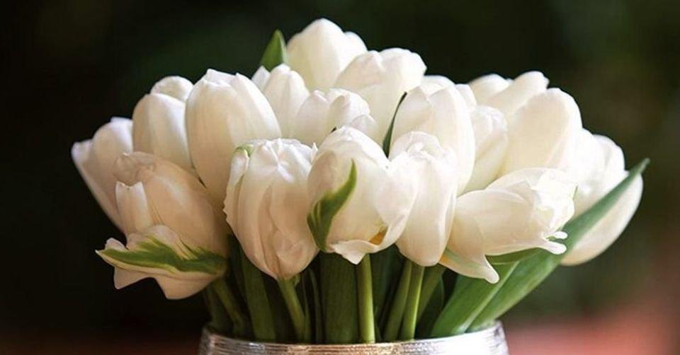 معاني ألوان الورود وعددها في الباقة