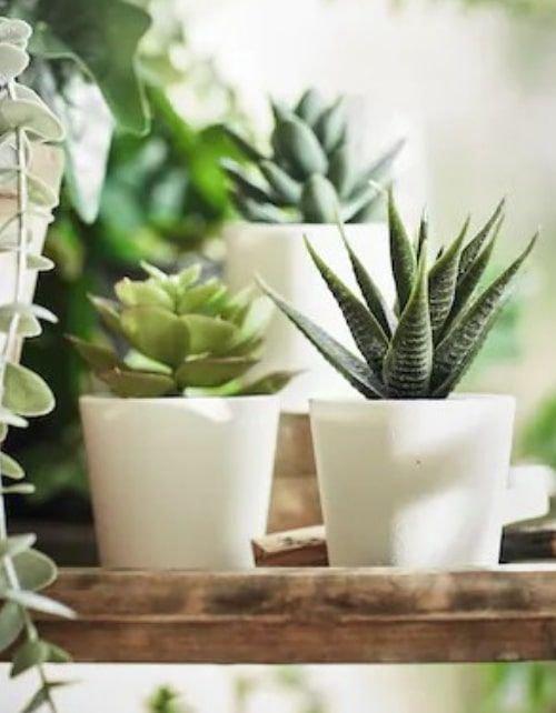 نبات زينة صناعي مع آنية من إيكيا، نباتات عصارية، 3 قطع، داخلي/ خارجي